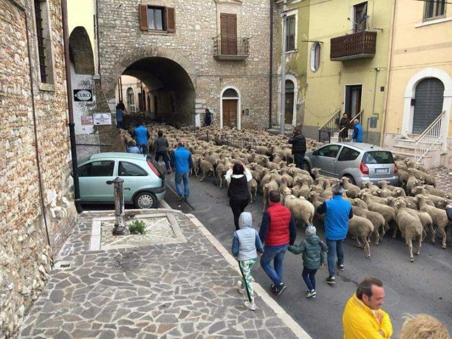 Lo spettacolo della transumanza, in Puglia mille pecore attraversano i paesi