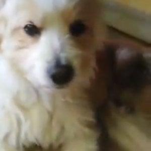 """Cane trascinato da un'auto a Trani, il sindaco denuncia: """"Responsabili devono pagare"""""""