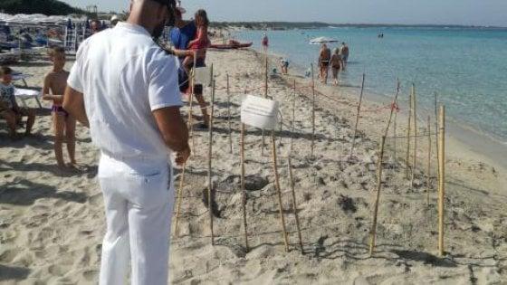 Due tartarughe marine nidificano in Salento tra i bagnanti: sotto tutela le spiagge di Gallipoli e Pesculuse