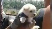 Il cucciolo intrappolato salvato dai vigili del fuoco