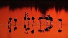 Fenicotteri all'alba: tutte    le tonalità dell'eleganza
