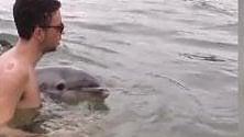 Peschici, il delfino nuota tra i bagnanti
