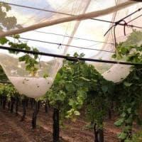 Maltempo, agricoltura in ginocchio: a Bari, Brindisi e Taranto si contano i danni