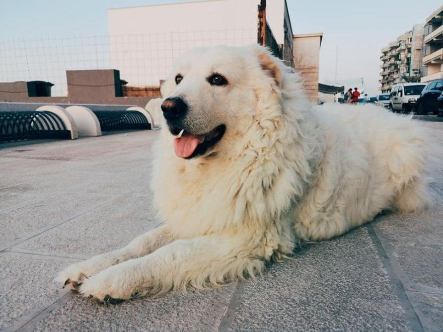 """Henry, il cane di quartiere più amato di Bari: """"700 padroni si prendono cura di lui"""""""