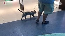 Un gatto a passeggio nel centro commerciale