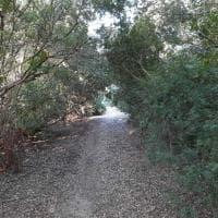 Il Monte dei diavoli di Manduria, scrigno di macchia mediterranea a due passi dal mar Ionio