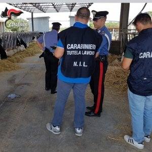 Caporalato, pastore sfruttato nel Barese per 1,80 euro all'ora: arrestato titolare della masseria
