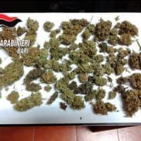 Bari, azienda produce cannabis sativa con principio attivo superiore al