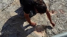 Jurassic Park in Puglia   20 mila orme di dinosauri