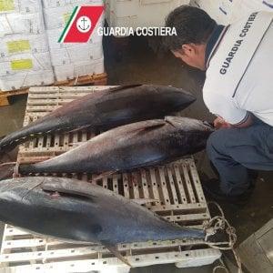 Bari, un quintale di tonno rosso: multe per 17mila euro a due pescatori sportivi