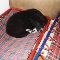 Bari, spacciano il loro cane come randagio per non pagare le cure veterinarie: