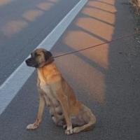 Gallipoli, cagnolina abbandonata sulla statale con una zampa rotta: la salvano i carabinieri
