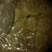 C'è un verme nel panino della mensa scolastica, l'ira delle mamme di Brindisi:
