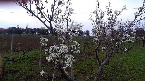 """Puglia, giorni contati per il caldo anomalo: in arrivo il gelo. Allarme Coldiretti: """"Così si perde la frutta primaverile"""""""