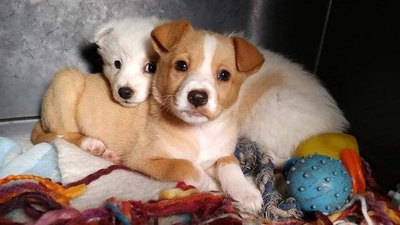 Bari, due cuccioli abbandonati in un sacco per la spazzatura: salvati dai volontari e adottati da due famiglie