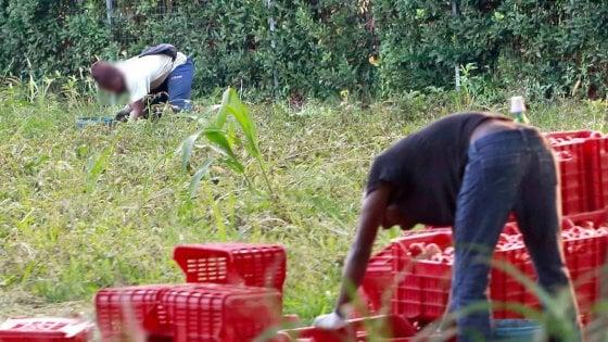 Caporalato, 3 imprenditori agricoli arrestati a Foggia: sfruttavano 50 immigrati nei campi