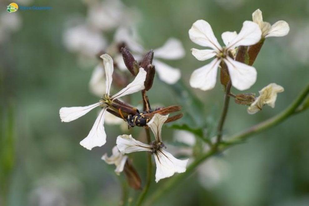 Uno spazio dedicato alle api a Torre Guaceto: la riserva apre a 'Bee the future'