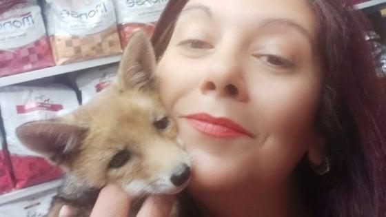 La volpe si crede un cane: denutrita e in cerca di coccole, è stata salvata alla periferia di Foggia
