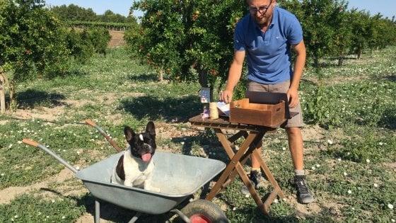 """Il melograno si coltiva in videochiamata: l'idea di un contadino a Foggia. """"Così l'agricoltura è interattiva"""""""