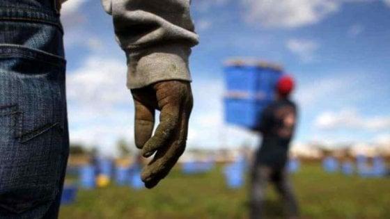 Caporalato |  fatturava 6 milioni pagando i braccianti 3 euro l' ora |  arrestato noto imprenditore agricolo