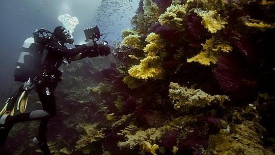 Isole Tremiti, una foresta nascosta a 60 metri di profondità: è il corallo nero di duemila anni fa