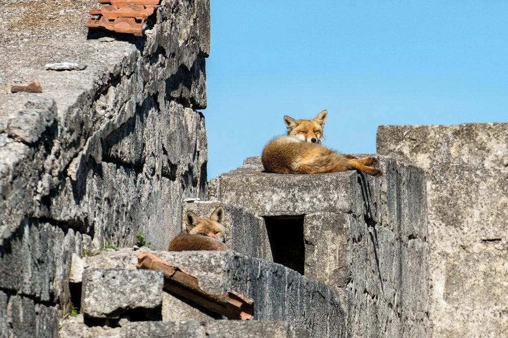 Le volpi e la ghiandaia, il falco e la stregona: il lato selvaggio (e nascosto) della Puglia