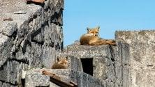 Le volpi e la ghiandaia  il lato selvaggio di Puglia