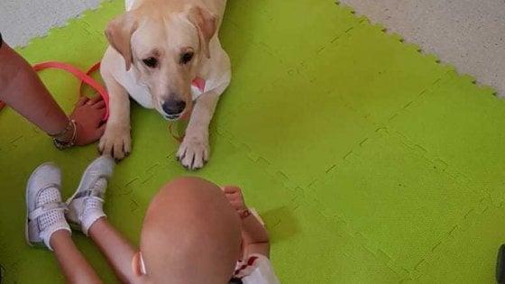 """Pet therapy, l'importanza di un cane in corsia: """"Aiuta i bimbi malati ma anche i medici e gli infermieri"""""""