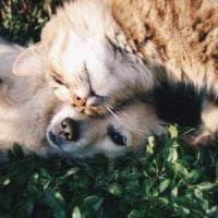"""In cani e gatti trovati gli anticorpi per il Covid-19: """"Ma non diffondono il virus"""""""