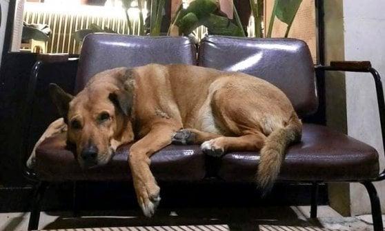 Rex va a messa, in pizzeria e al mercato: il cane libero adottato dai cittadini di Altamura