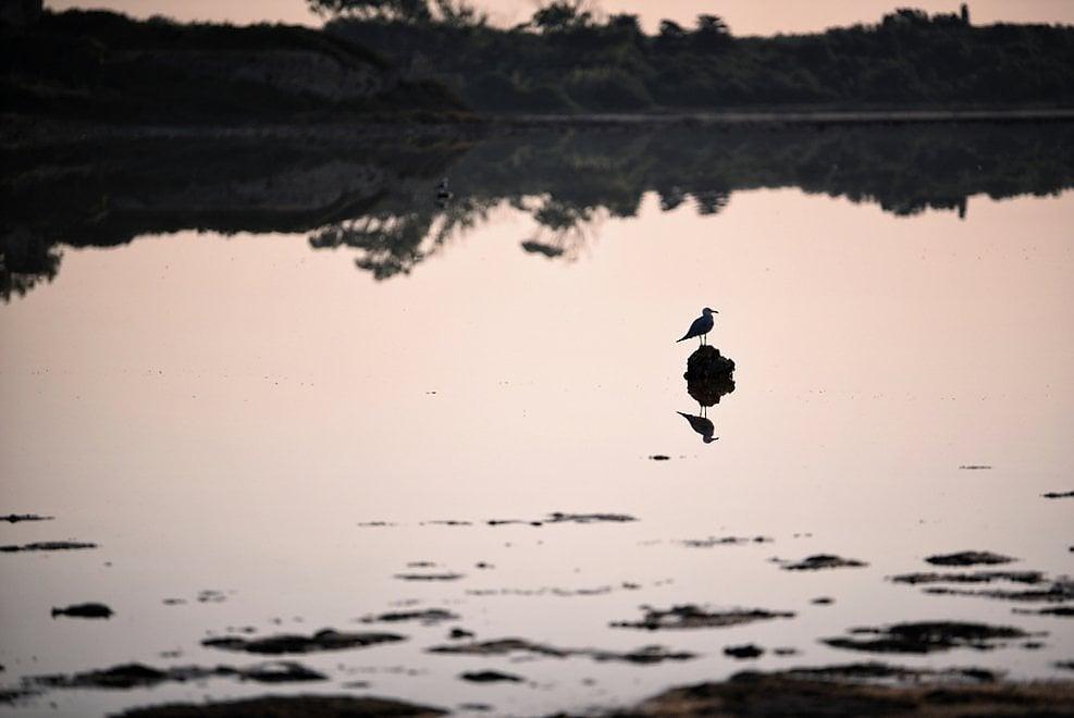 Salina dei Monaci, la natura si specchia nell'acqua: lo spettacolo al tramonto
