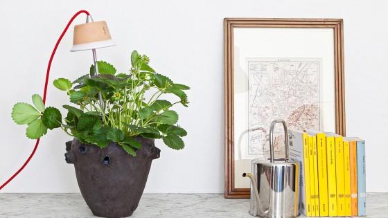 L'orto in casa, pomodori e basilico crescono in salotto