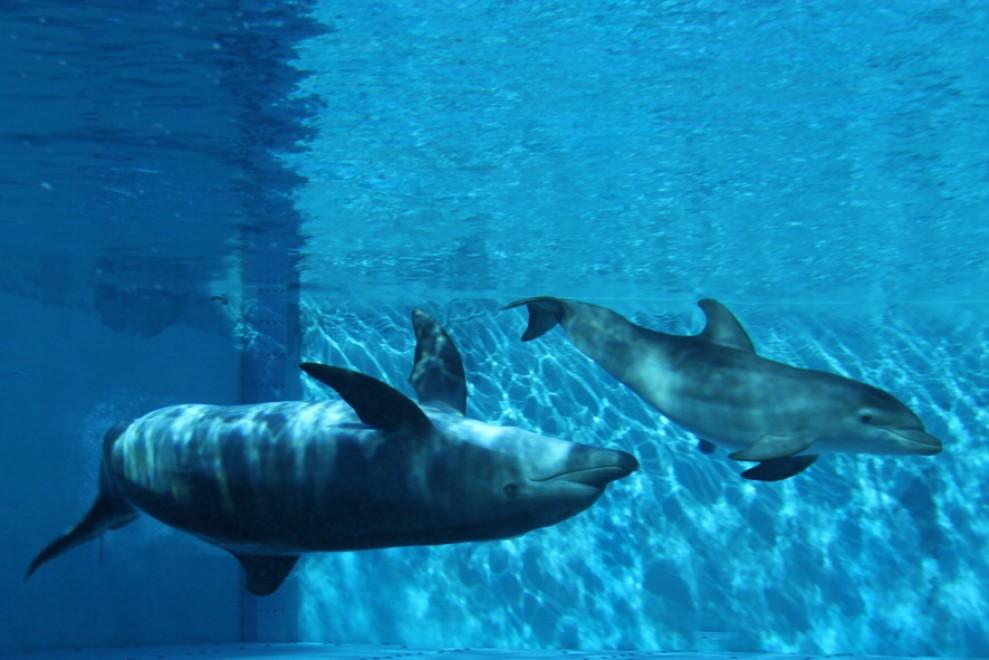 Giochi gratis del delfino