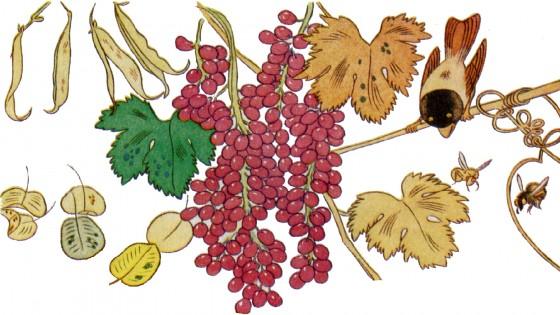 Baby giardinieri ad honorem all orto botanico for Giardinieri genova
