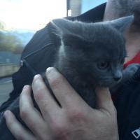Traffico di animali, cuccioli di cane e gatto salvati dalla Polstrada