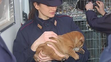 Traffico di animali, la Polstrada salva  81 cuccioli -   Guarda le foto