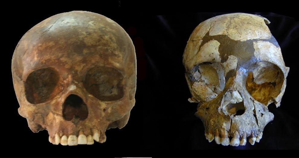 Dallo studio di denti fossili il perché della scomparsa dell'Uomo di Neanderthal