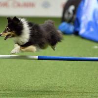 I cani si prendono il parquet: le loro olimpiadi all'Unipol Arena