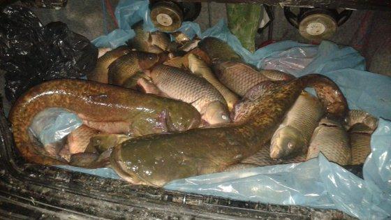 Vendevano il pesce nel baule della macchina a porta san - Porta san vitale bologna ...
