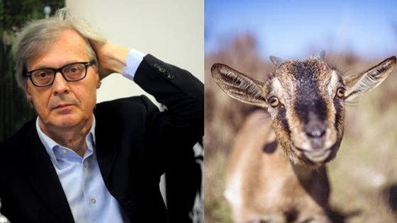 """""""Offende sempre le capre"""": Sgarbi denunciato dagli animalisti"""