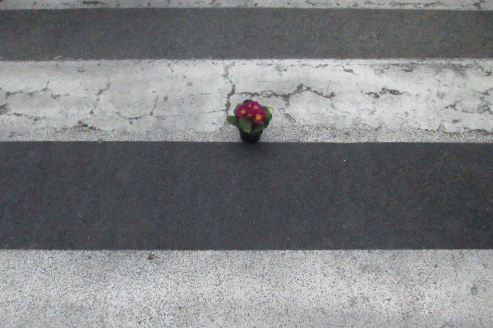 Bologna, #bastamortinstrada: i ciclisti posano un fiore per la donna travolta sulle strisce