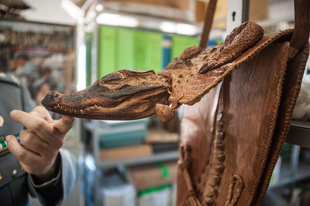 Felini imbalsamati, zanne di elefante: souvenir illegali all'aeroporto di Bologna