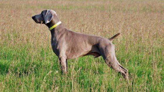 Dalle Doppiette Alla Pet Therapy A Bologna Un Progetto Per Salvare I