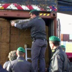 Cocaina dal Sudamerica nel container del pesce, 18 arresti delle Fiamme gialle di Bologna
