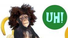 Scimmie in città con la Par Tòt