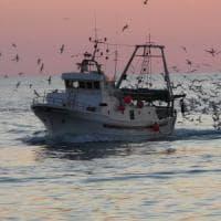 Stop alla pesca fino a Rimini, occhio al finto pesce fresco