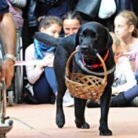 Albergo di Rimini rifiuta una persona cieca col suo cane