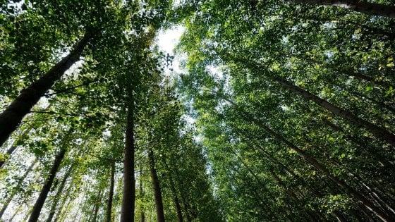 Bologna, 23 alberi da abbattere ai Giardini Margherita