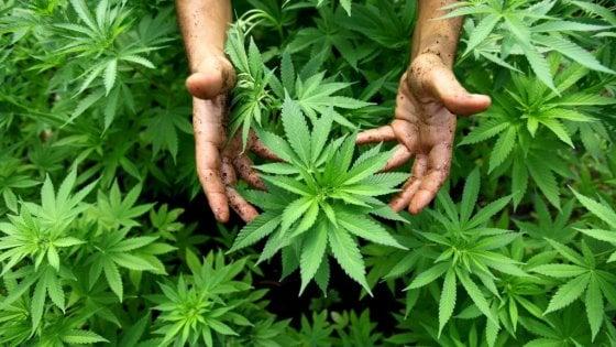 Bologna, tre giorni per parlare di cannabis (senza patrocinio del Comune)