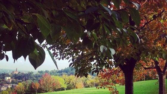 Libera: Giornata Nazionale degli Alberi alla Cepa